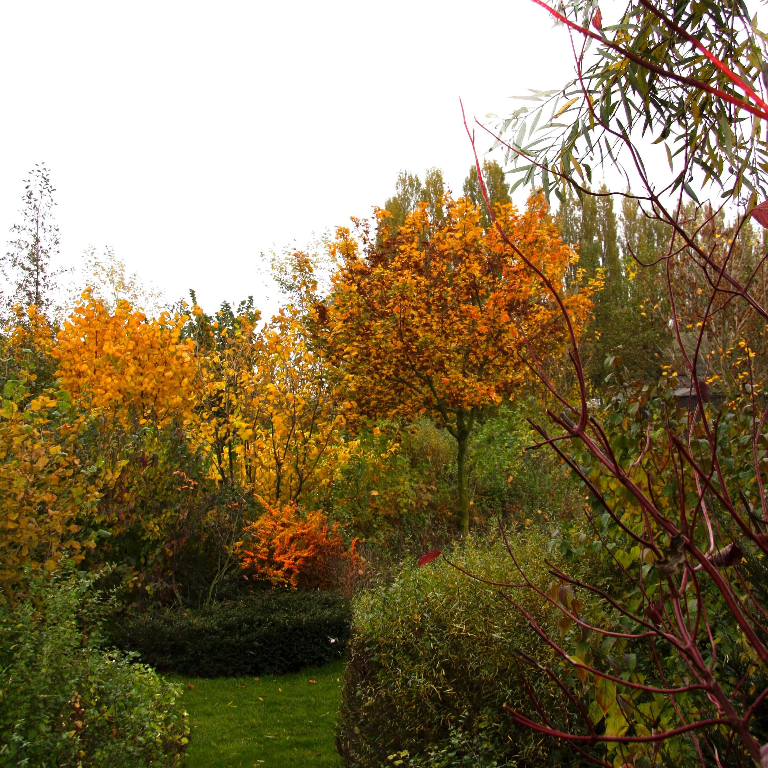 Herfst in de landschapstuin