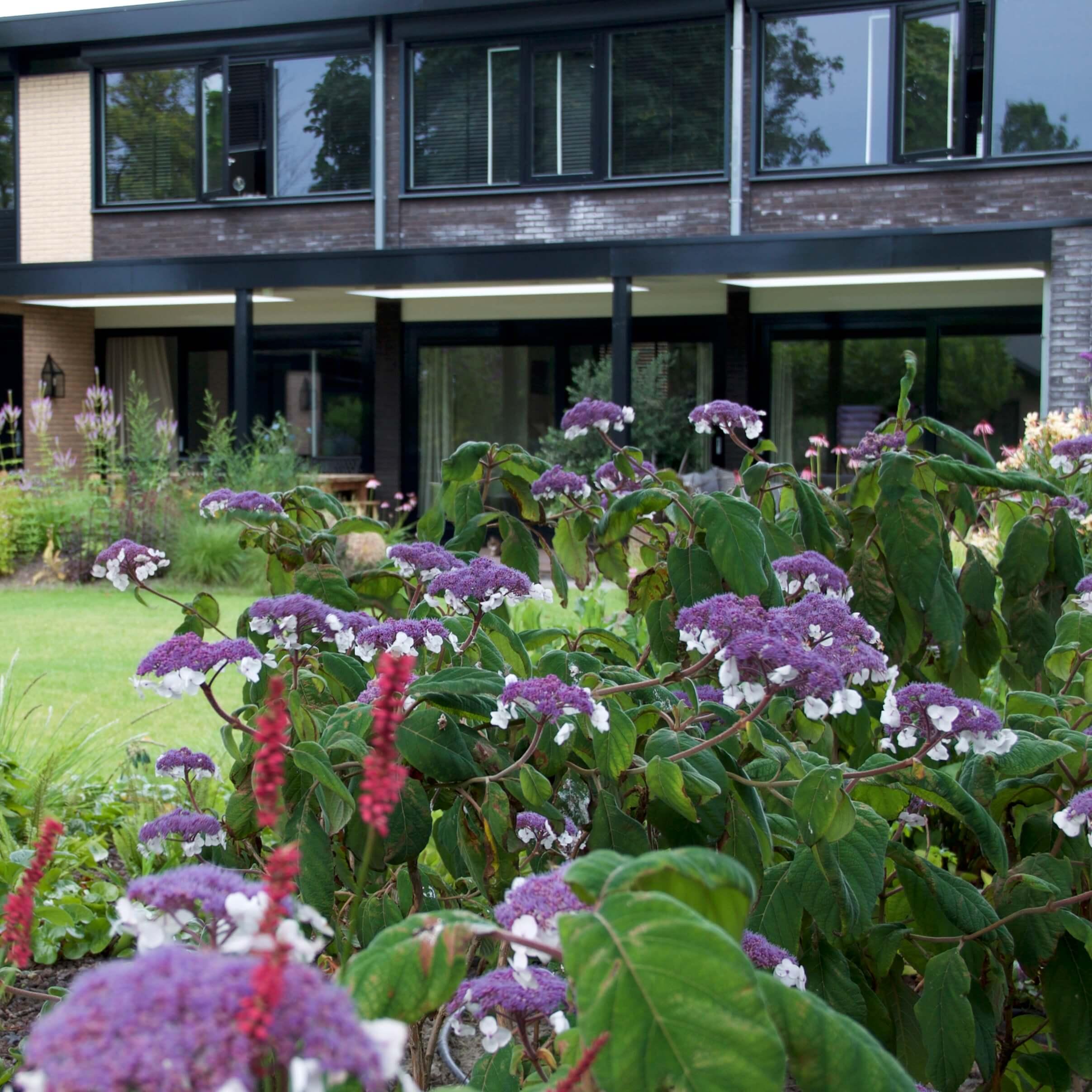 metamorfose vaste plantentuin