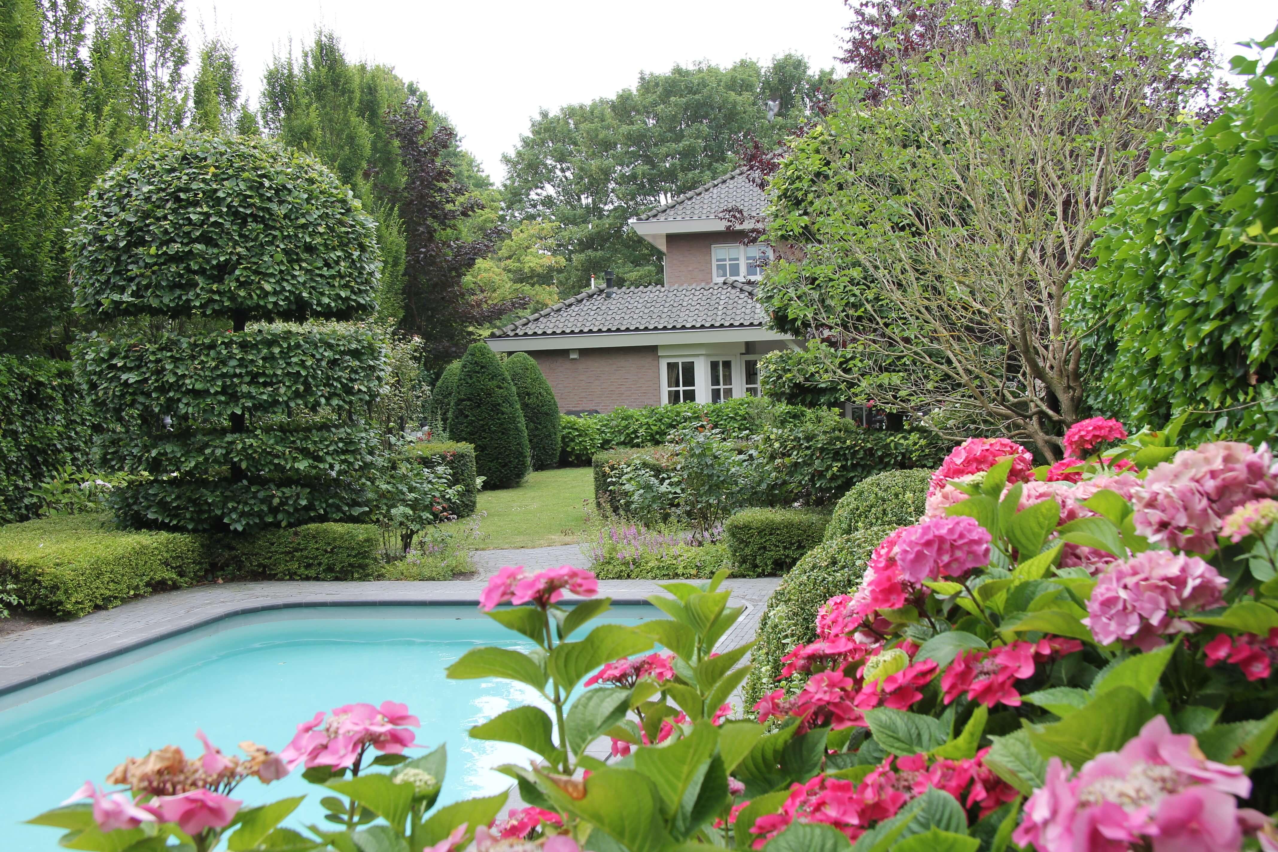 Hortensia's naast het zwembad