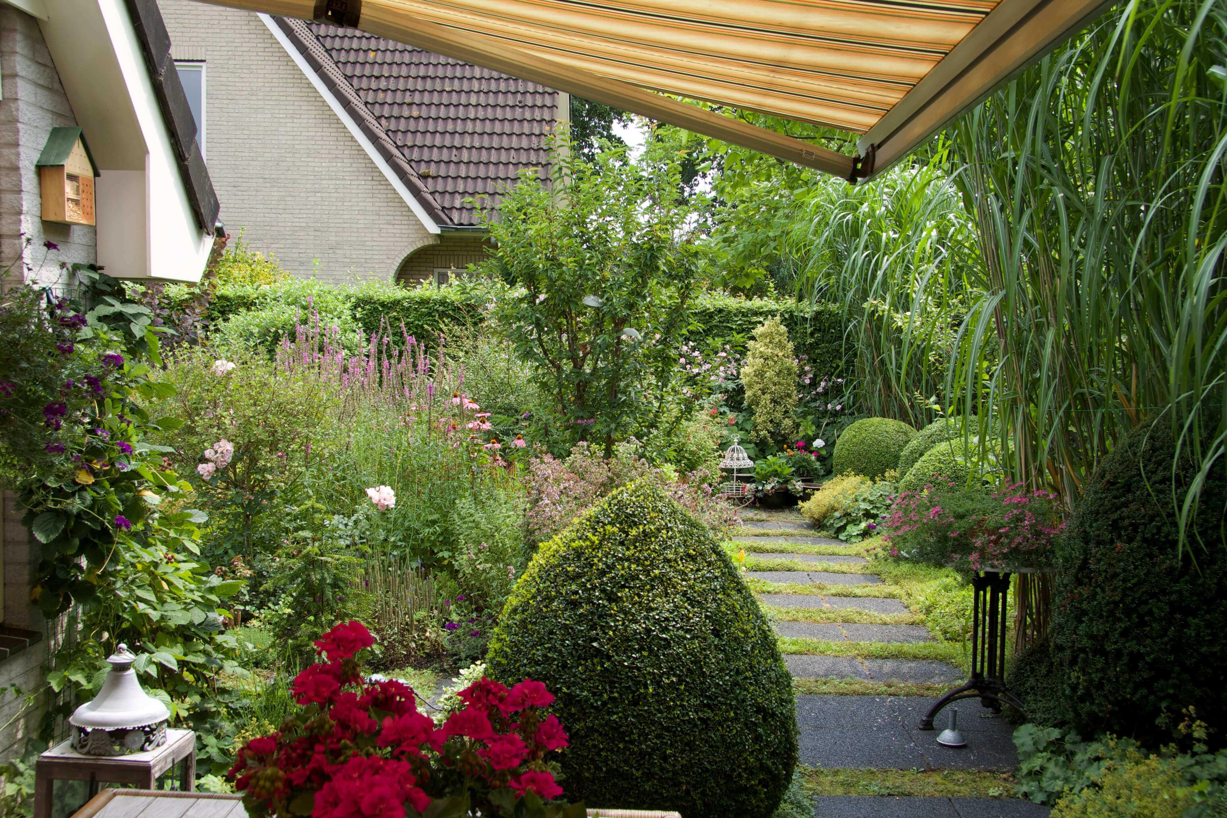 Volgroeide romantische tuin