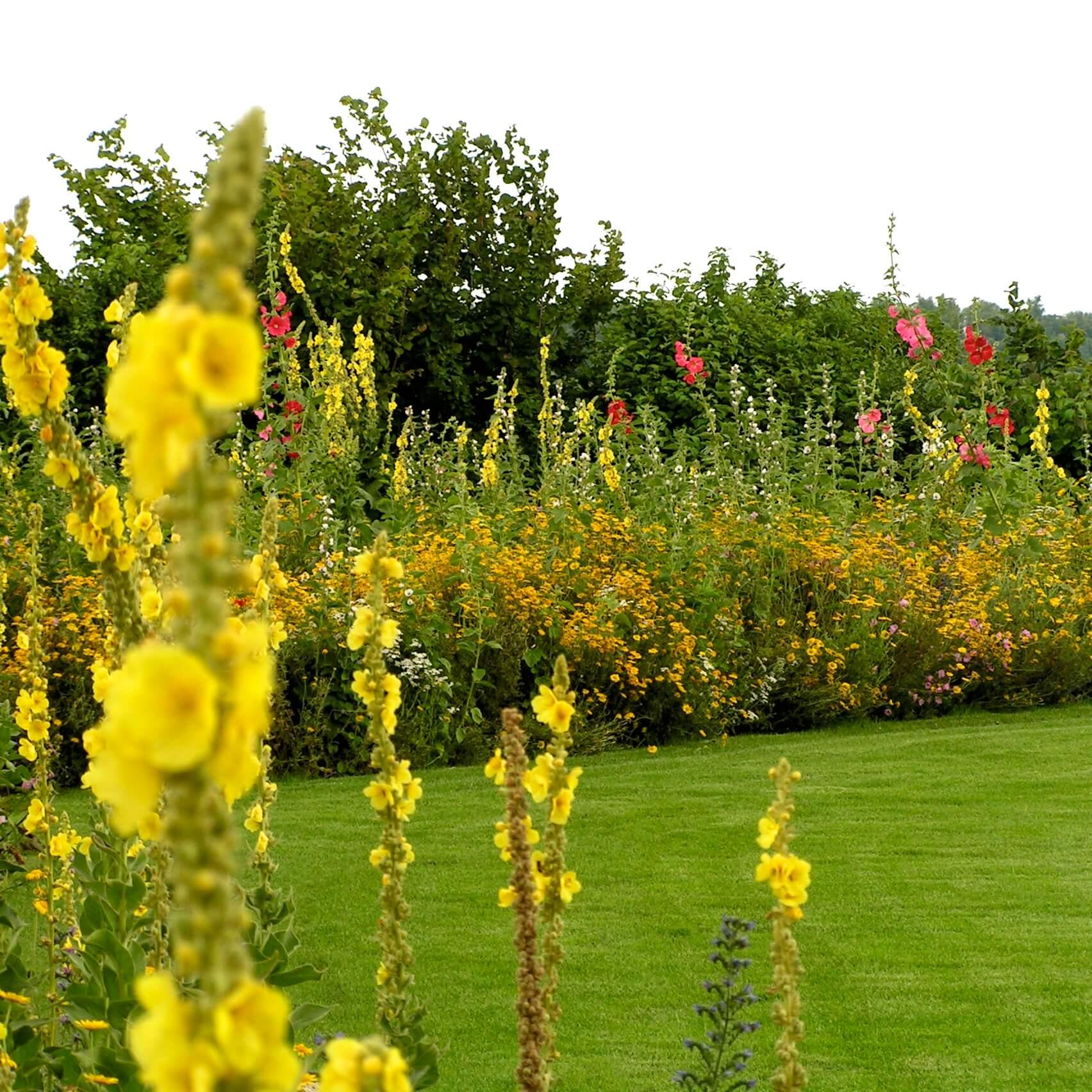 Gele toorts in de tuin
