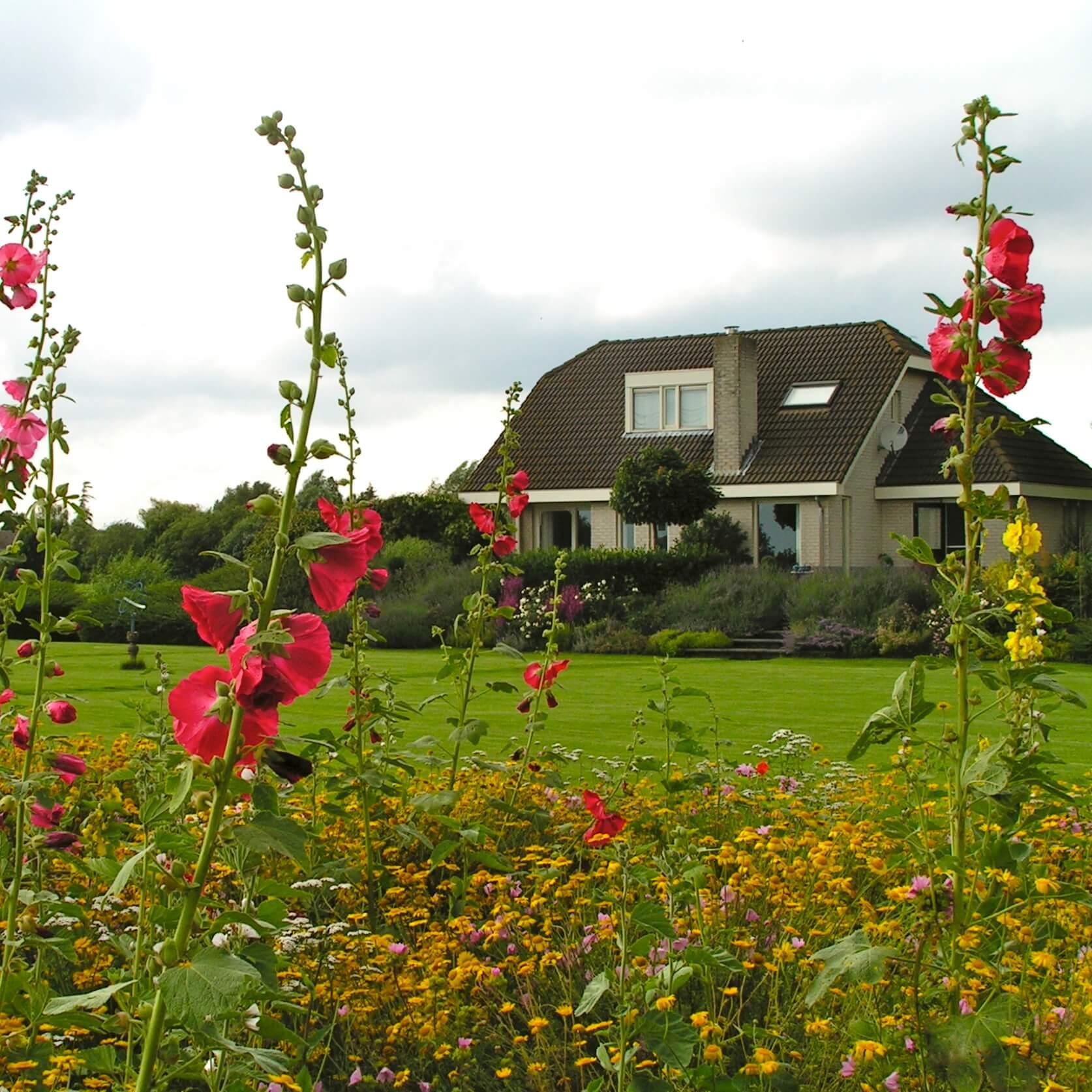 stokrozen in grote tuin
